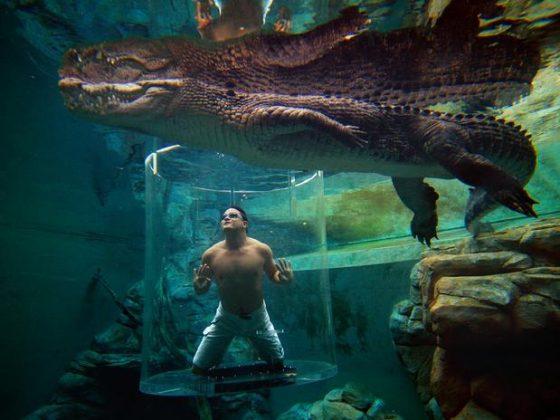 Crocosaurus Cove, Austrália - Único ponto de mergulho com crocodilos da Austrália, o Crocosaurus Cove convida os aventureiros a experimentarem a gaiola da morte