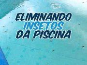Como eliminar insetos da piscina