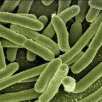 Escherichia coli - Bactéria que cresce na piscina sem deseinfecção