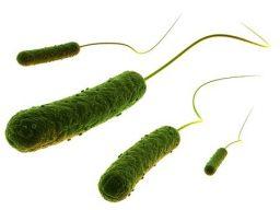 Pseudomonas - Bactéria que cresce na piscina sem deseinfecção